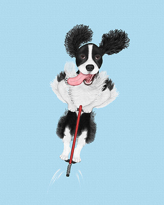 Black Springer Spaniel jumping on a pogo stick