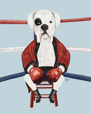 White Boxer in the ring. Sitting in the red corner.